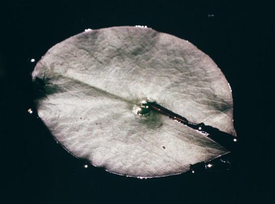 »Ein Teller« (aus: »Seerosen«), 2015, analoger C-Print, 69 x 88,5 cm